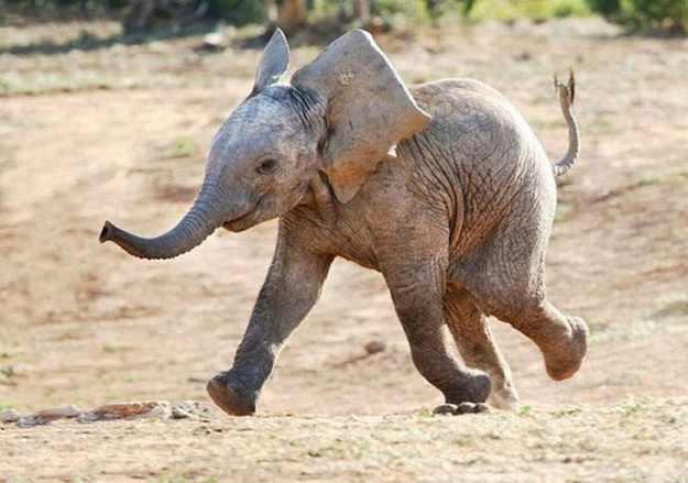 החיות הכי שמחות בעולם!