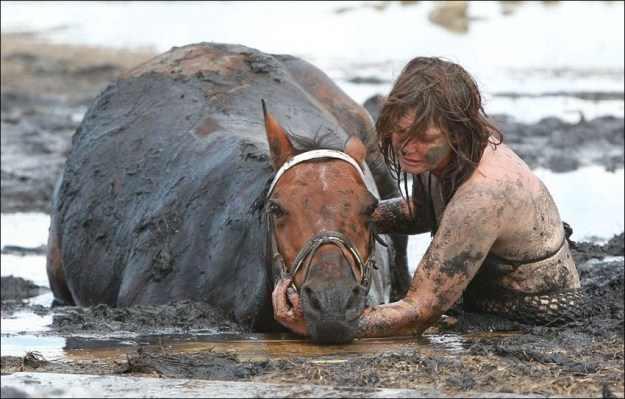 סיפור בתמונות: מצילים סוסה