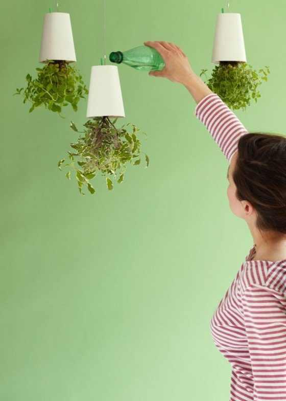 צמחים תלויים באוויר