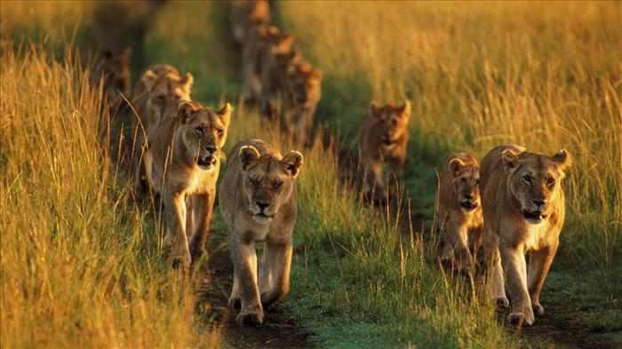 בעלי חיים מוארים על ידי השמש בשקיעה - תמונות מדהימות!