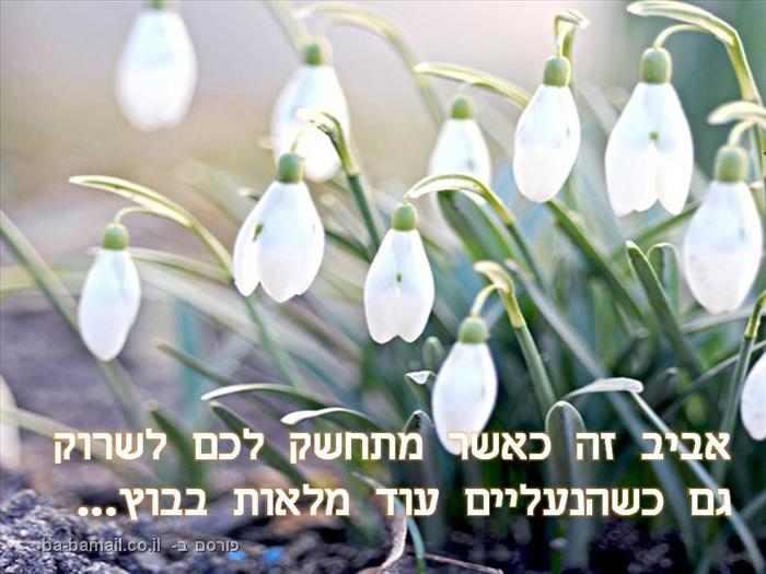 ציטוטים מקסימים על האביב
