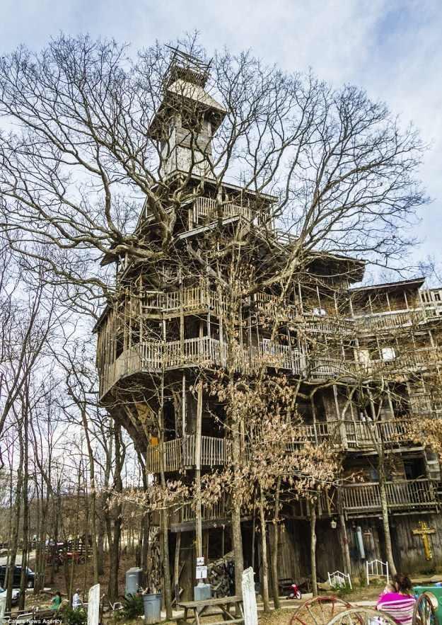 בית העץ הגבוה בעולם