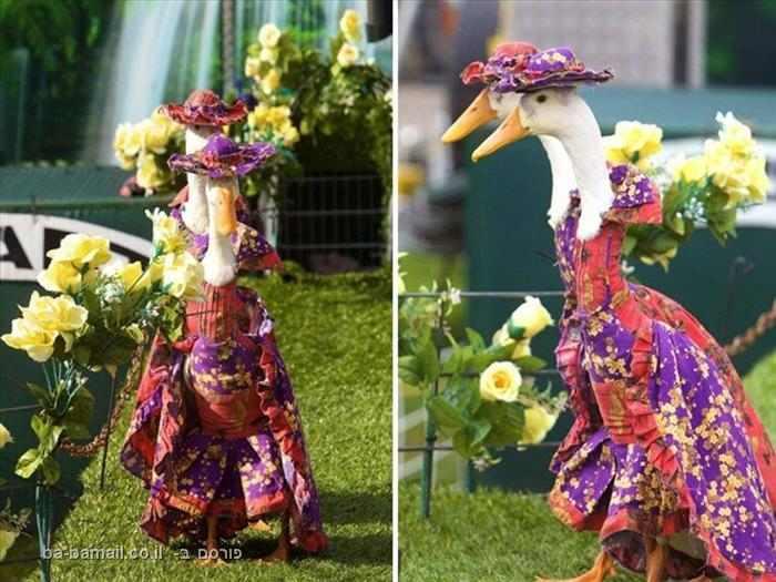 תהלוכת ברווזים בסידני