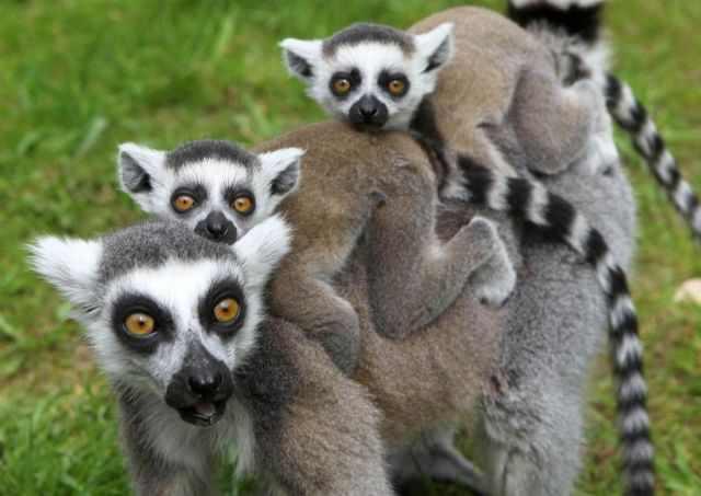 תמונות מתוקות של בעלי חיים