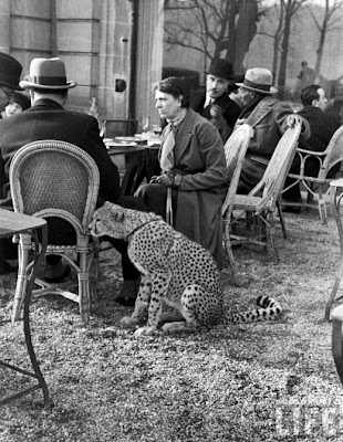 חיות מחמד מההיסטוריה