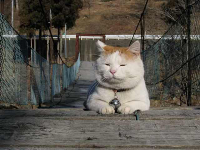 תמונות של החתול העצלן ביותר ביפן!