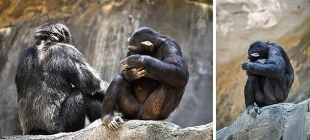 חיות מתביישות מהמצלמה