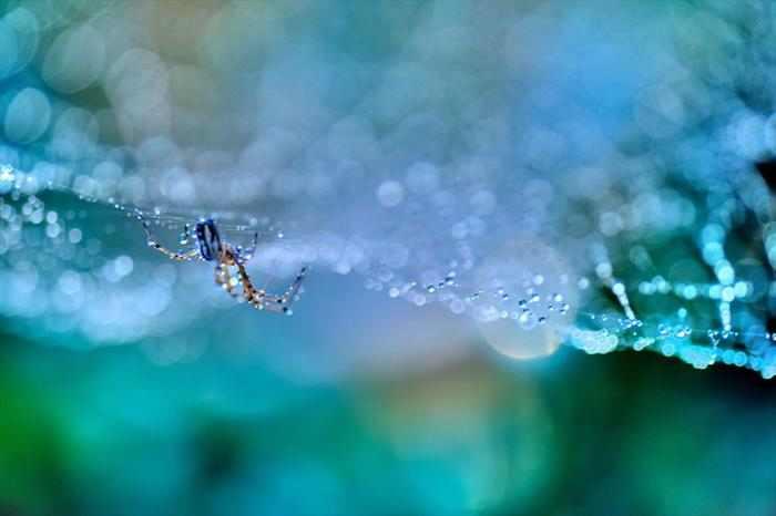 קורי עכבישים כמו שרשרת פנינים