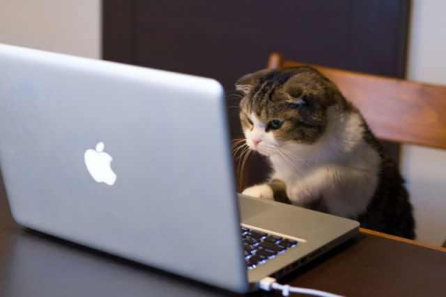 תמונות של חיות עם מחשבים וספרים