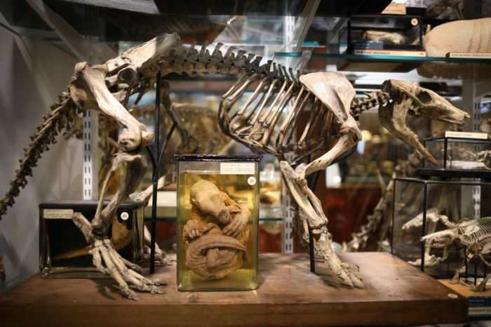 המוזיאון לזואולוגיה בלונדון