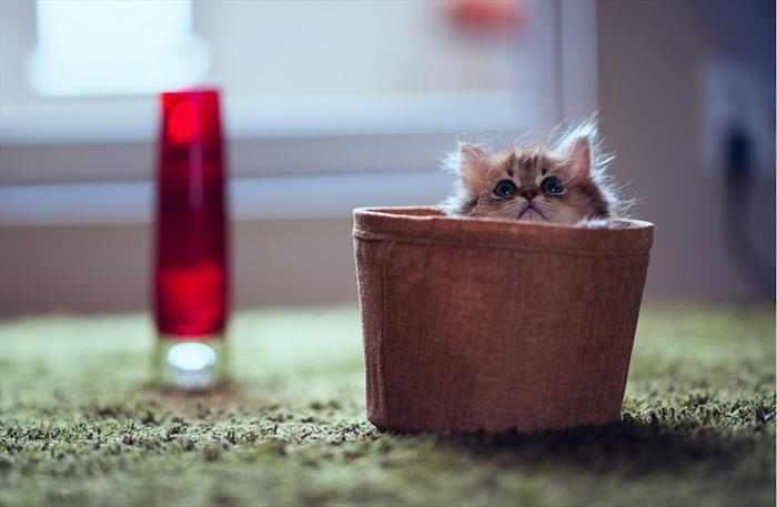 תמונות של חתול מתוק