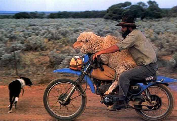 תמונות מצחיקות מאוסטרליה