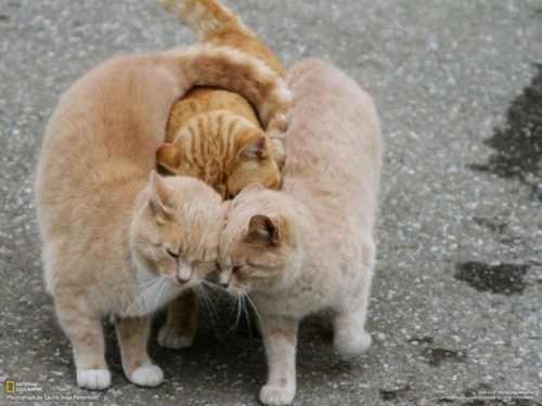 תמונות מתוקות של חיות