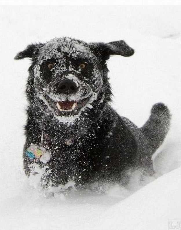 תמונות מתוקות של כלבים בשלג