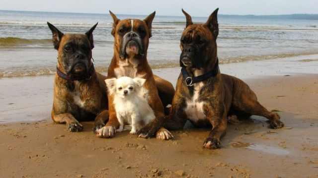 תמונות של בעלי חיים עושים פרצופים מצחיקים