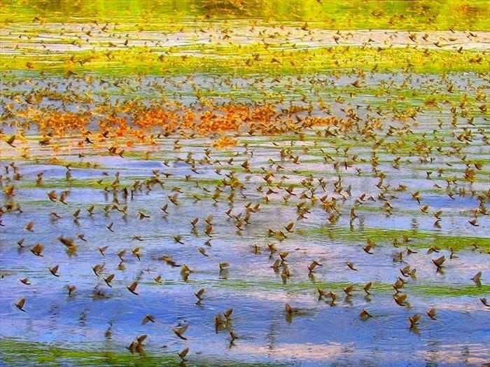 נחיל חרקים - תופעת טבע