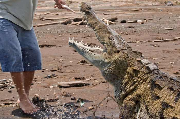 מגדל תנינים בקוסטה ריקה