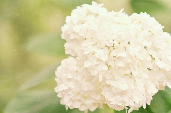 הפרחים היקרים ביותר בעולם