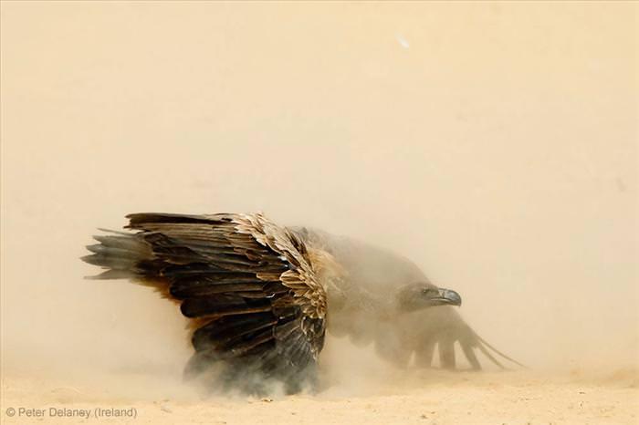 תחרות צילומי טבע 2013