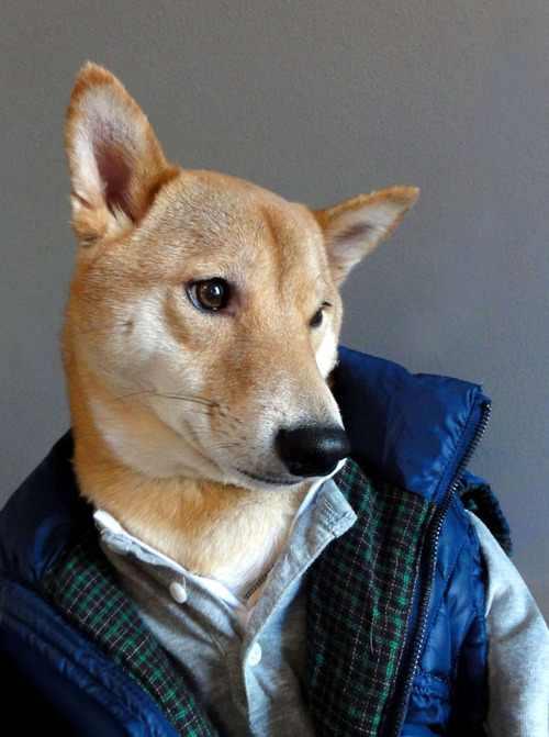 כלב לבוש בבגדי גברים