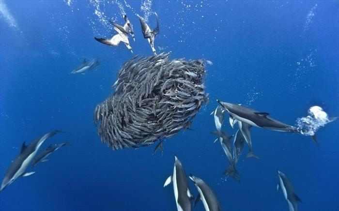 צילום מתחת למים מדהים