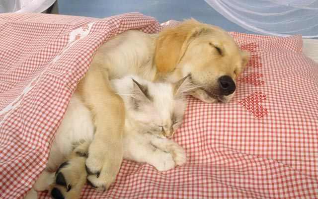 חתולים וכלבים ישנים יחד