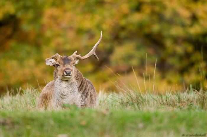 תמונות טבע ובעלי חיים