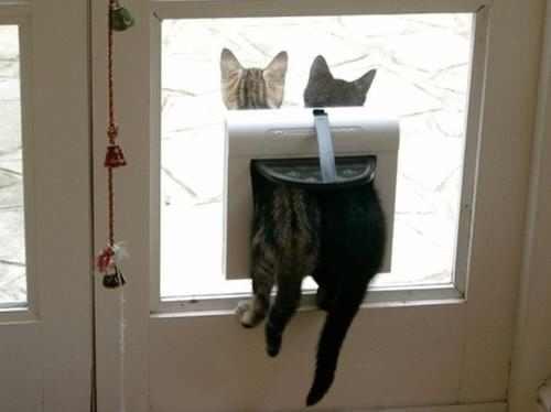 תמונות של חיות מצחיקות