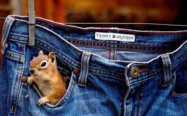תמונות חמודות ומצחיקות של בעלי חיים