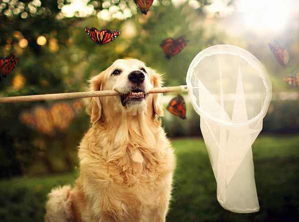 תמונות של כלב מאושר