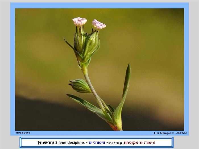 פרחי בר ובעלי חיים בישראל