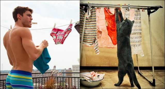 תמונות של חתולים מחקים בני אדם