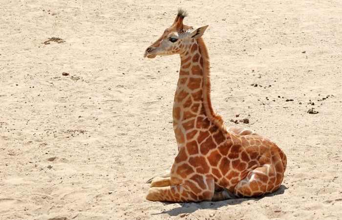 תמונות יפהפיות של חיות