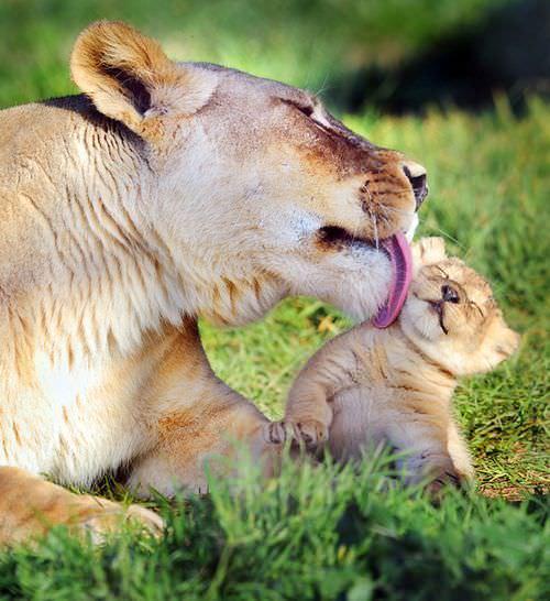 אימהות וגורים בטבע