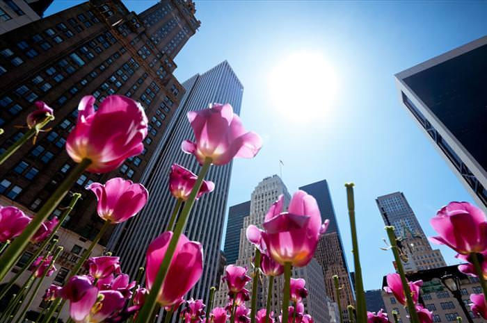 צבעוני - הפרח היפה בעולם