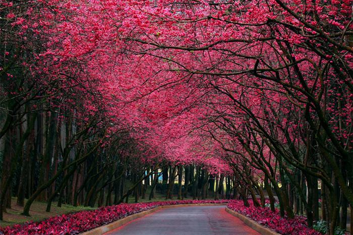 תמונות יפות של עצים