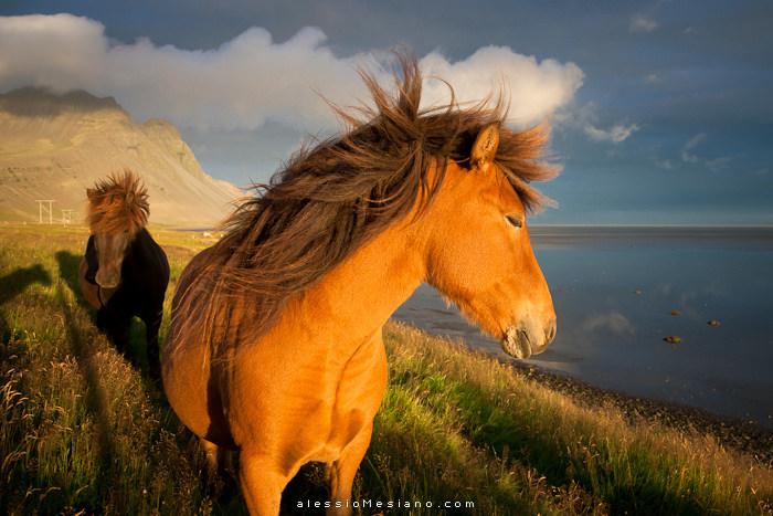 סוסי פרא