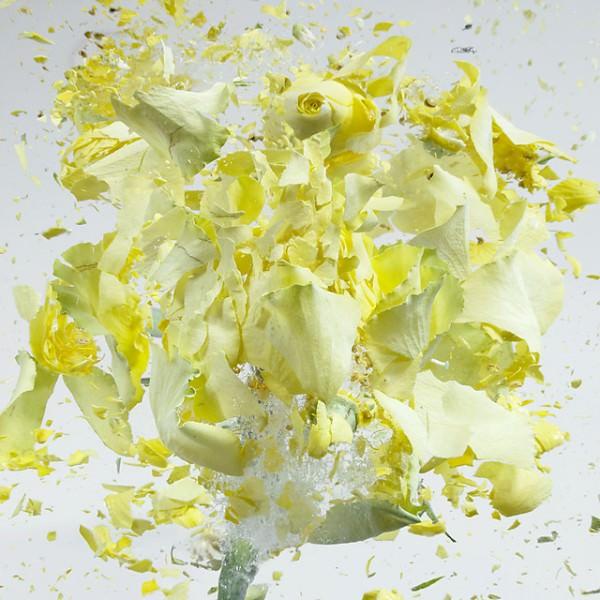 פיצוצי פרחים