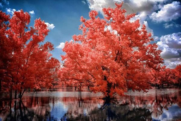 תמונות מדהימות באינפרא אדום