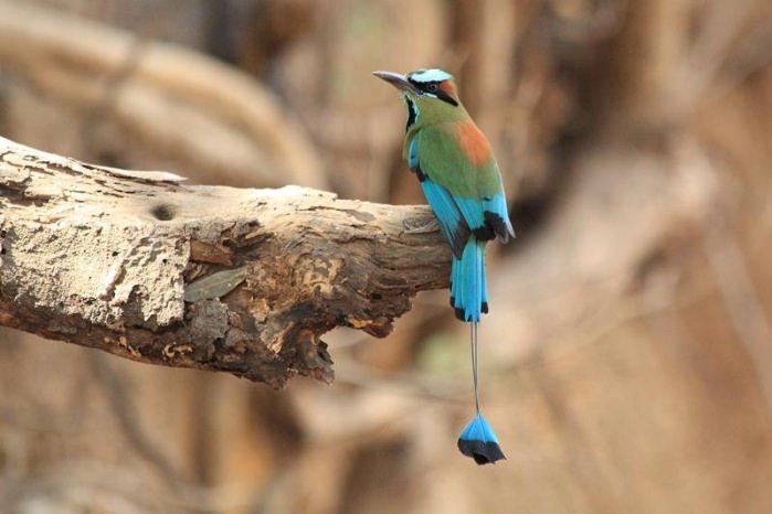ציפורים מדהימות