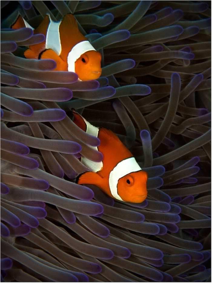 תמונות תת ימיות מדהימות