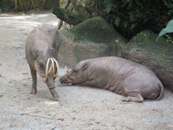 בעל חיים לא מוכר