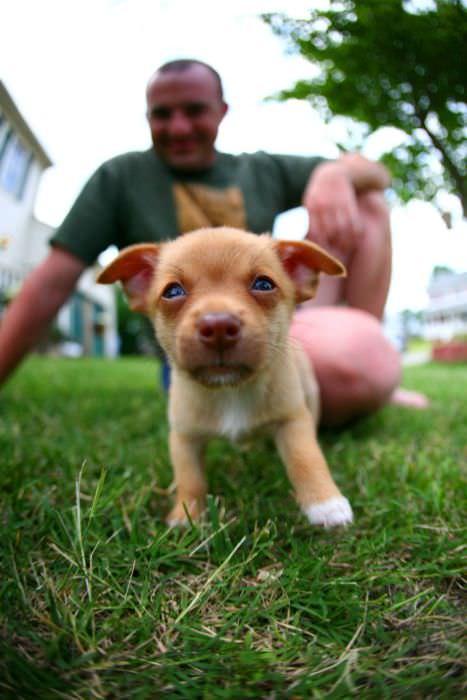 הכלבים החמודים בעולם!