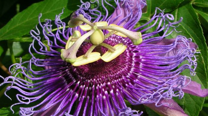 פרח מיוחד