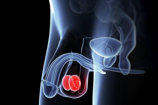 תמונות של סרטנים