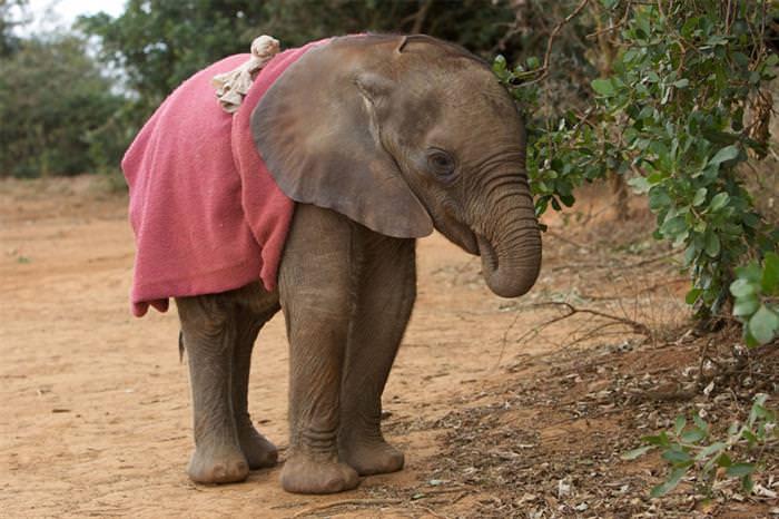 חיות חמודות ועובדות מעניינות