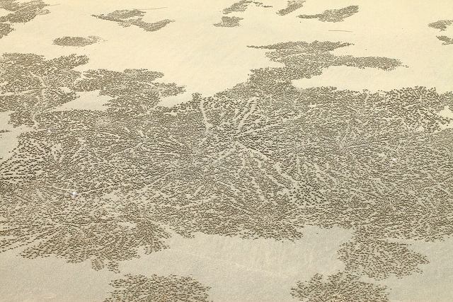 סרטנים יוצרים צורות בחול