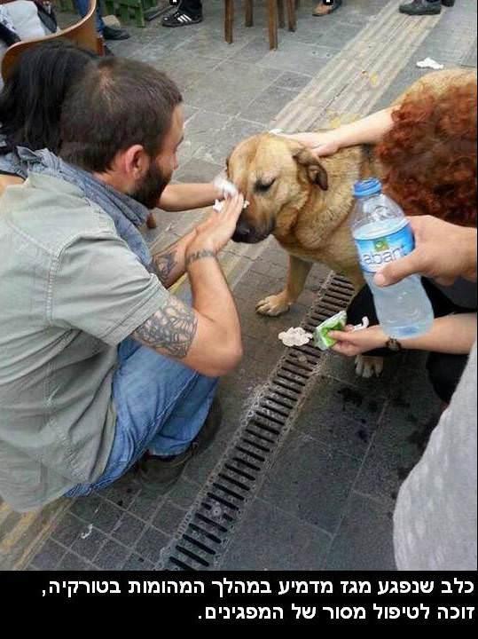 מצגת מרגשת על חיות ובני אדם