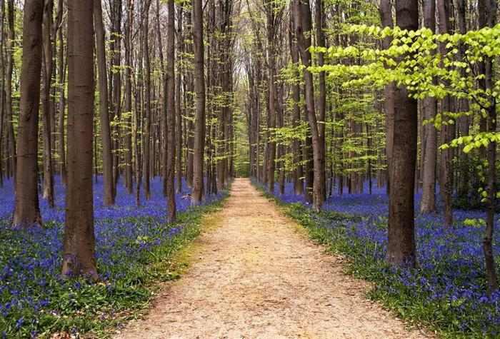 17 מקומות בעולם שאתם חייבים לראות באביב!