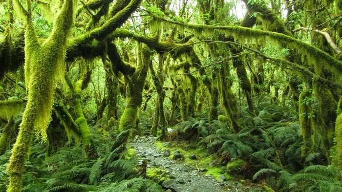 האי הדרומי ניו זילנד